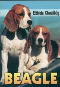 Beagle - okładka książki