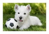 Pupile. Pies biały (puzzle mini) - zdjęcie zabawki, gry