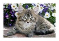 Pupile. Kot szary (puzzle mini) - zdjęcie zabawki, gry
