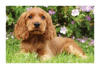 Pies brązowy (puzzle mini 54-elem.) - zdjęcie zabawki, gry