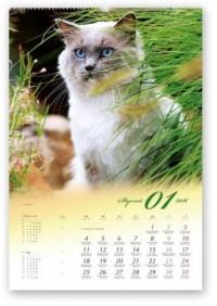 Kalendarz 2016. Koty domowe - okładka książki