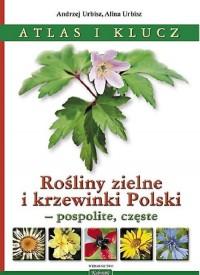 Rośliny zielne i krzewinki Polski. Rośliny zielne i krzewinki Polski - pospolite, częste. Atlas i klucz - okładka książki